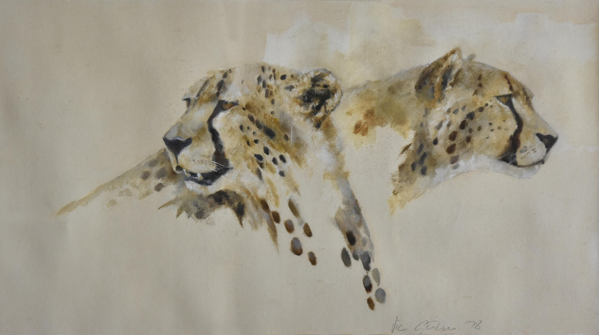 Two Cheetahs (unknown)